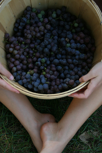 The Essig family started with blueberries and later expanded to include blackberries, raspberries and strawberries.
