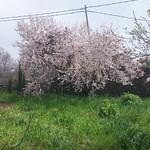 Olli April 14