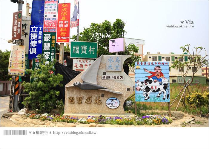 【彰化景點推薦】乳牛彩繪村(福寶村)~數百頭彩色小牛+夢幻藍晒圖的彩色村2
