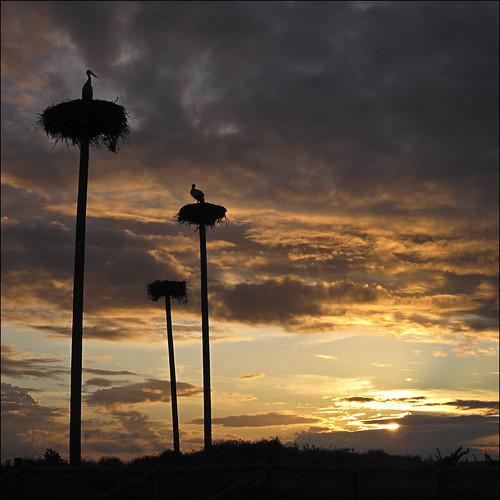 sunset clouds contraluz atardecer cielo nubes cáceres cigüeña nwn extremadura caceres ciconia malpartidadecáceres nidos