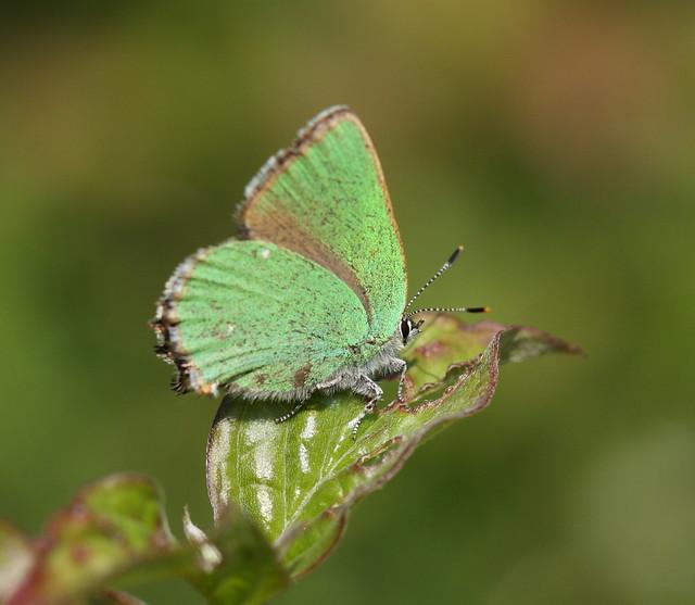 butterfly&war1