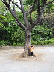 滑り台と大きな木 2014/4