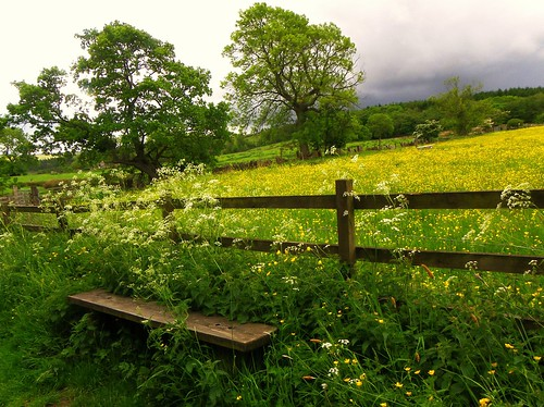 flower green yellow rural fence bench landscape countryside meadow 1001nights buttercups