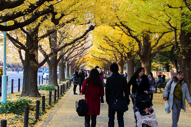 ginkgo avenue (aka icho namiki) - 6