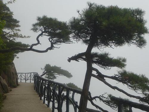 Jiangxi-Sanqing Shan-3 sentier du soleil (50)