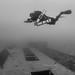 diving mactan by Paul Cowell