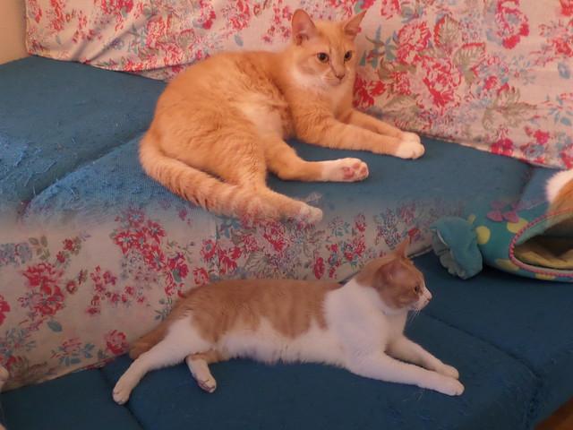 Cat Cafe Ebisu