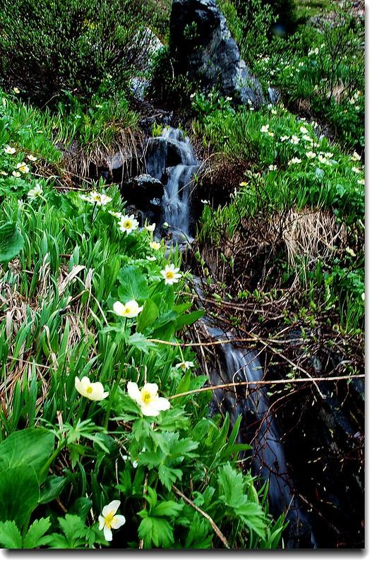 Wildflowers and Waterfall 7