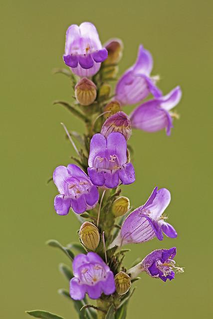 Wildflowerday2 2_1125