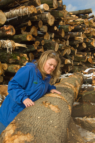 Retiring APHIS State Plant Health Director for Massachusetts, Connecticut and Rhode Island Patty Douglass inspects ALB damaged wood in Massachusetts.