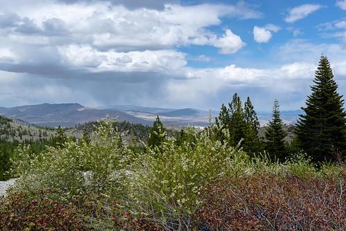 california dogvalley sierracounty
