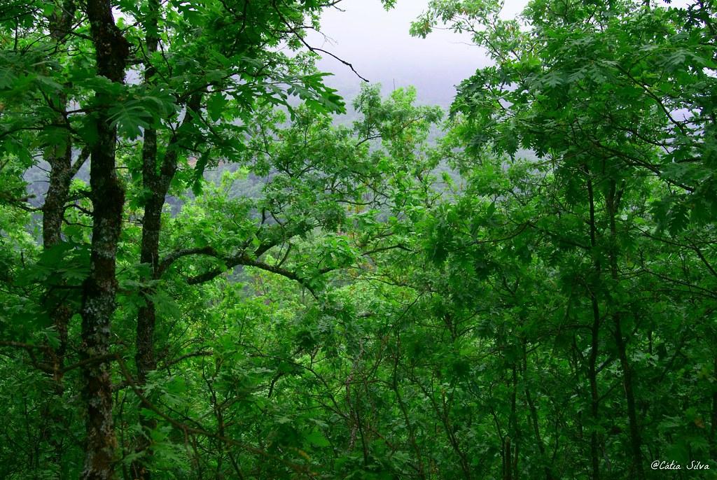 Reserva Natural de la Garganta de los Infiernos_Valle del  Jerte (2)