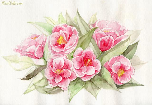 Camelias rosas // Pink Camelias