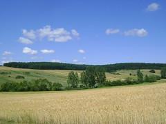 în vară când holdele grele.../summer fields