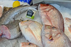 animal, fish, fish, seafood, red snapper, tilefish, oily fish, food, red seabream, snapper, tilapia,