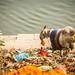 040 India Varanasi 130111 Jessica Wyld
