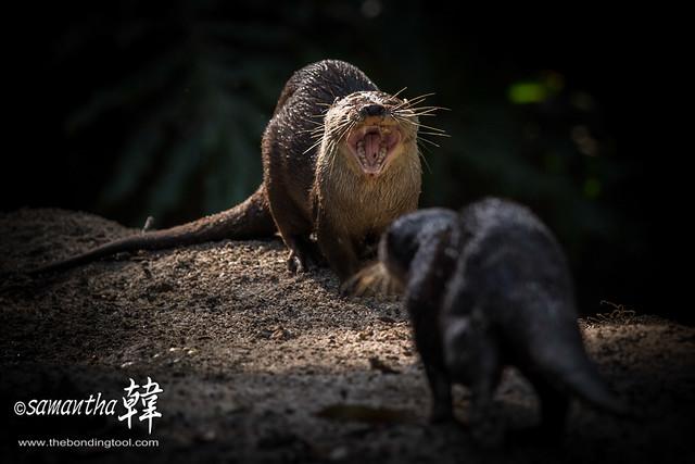 THE SINGAPORE ZOO 新加坡动物园