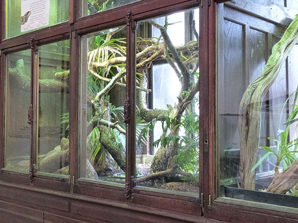vitrines reptiles