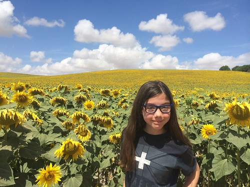 sunflowers spain></a></p> <p class=
