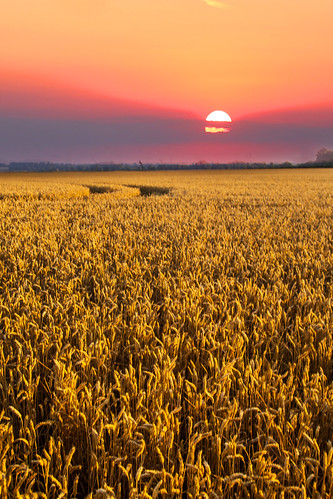 sunset summer sun field night landscape countryside cornfield nightsky hertfordshire hertfordshirelandscape