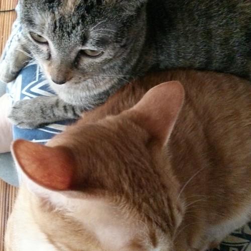 仲が良いね。しかし重い by Chinobu