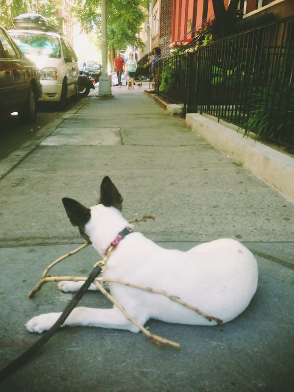 Someone is quite comfortable on the sidewalks of NYC.