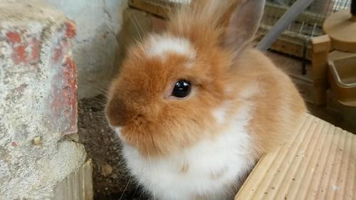 #animal #lovely #nice #cute #rabbit