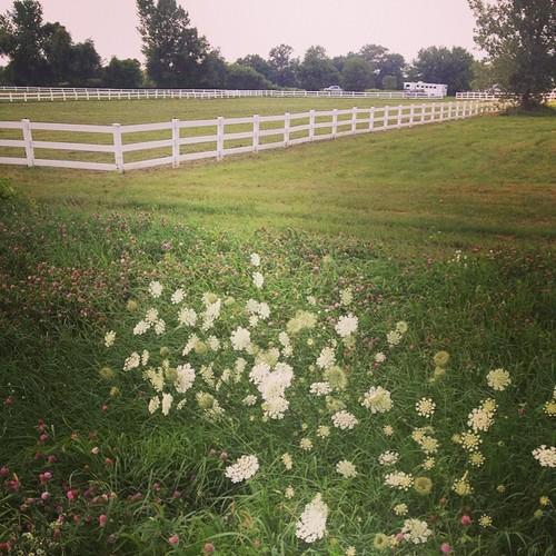 Biding Time #fence #horsefarm