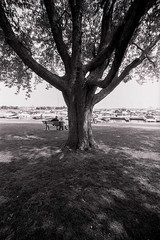 Tree in KIngston Harbor