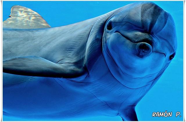 Delfín---(Dolphin)
