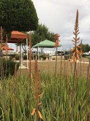 Eagle View RV Resort in Fort McDowell, Arizona