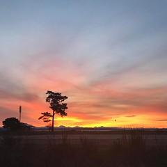 Sunrise over Admiralty Inlet. Headed into Port Townsend for my class on Crab identification. #adventureinspired #roamtheplanet #awesomeearth #earthfocus #wanderlust #pnwonderland #pnwspotlight #theelys #sunrise #wastateparks