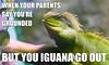 Iguana meme