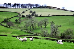 Peak District 7
