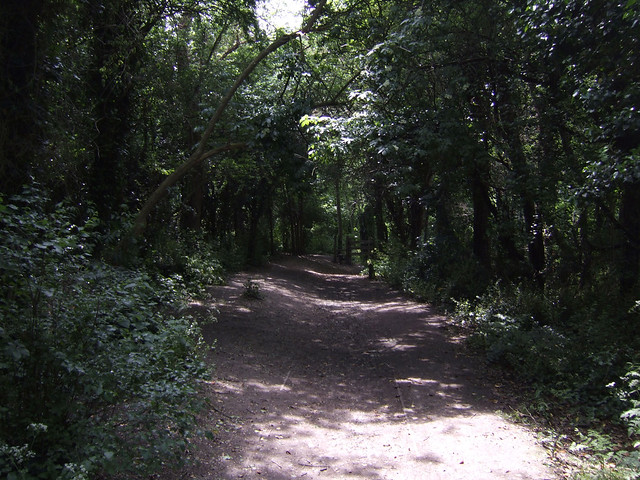 Wooded path near Herne Bay