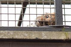 twycross zoo  -3245