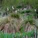 Small photo of Typha & Tussocks [Explore]