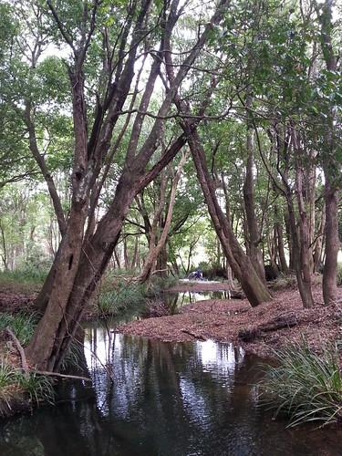 Koppin Yarrat Creek at Upper Lansdowne, NSW, March 2014