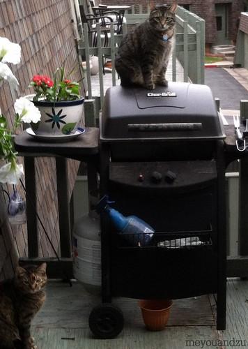Grill cat