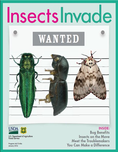 The Insects Invade magazine developed by the U.S. Forest Service in collaboration with Scholastic Inc. was distributed to 25,000 teachers nationwide this year.  (U.S. Forest Service)