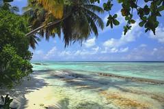 Paradise. Kunfunadhoo island in the Maldives (Soneva Fushi)