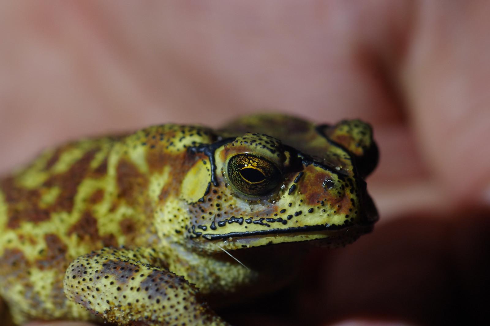 2014一些不很微距的本土小動物回顧