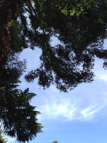 IMG_2581 Redwood and sky