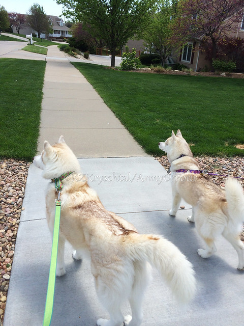 Mag & Cam heading out on a walk
