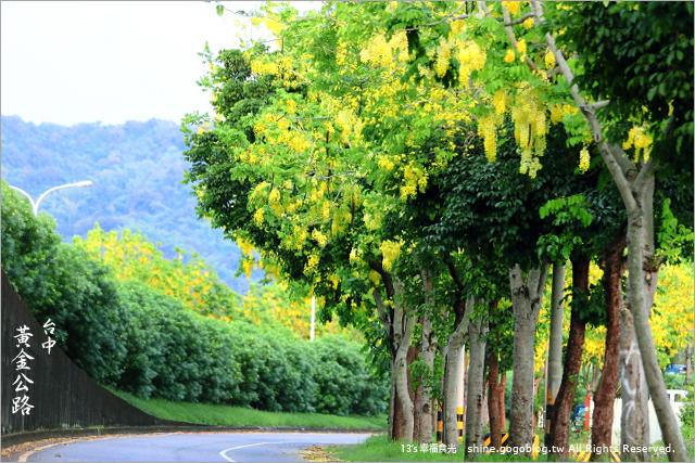 【台中阿勃勒】迷人!台中黃金公路~中投快速道路下起阿勃勒黃金雨《13遊記》