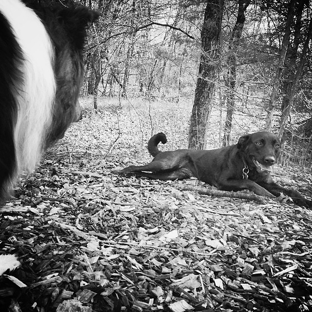 Millie has my stick in B&W