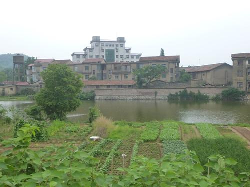 Jiangxi-Yushan (125)