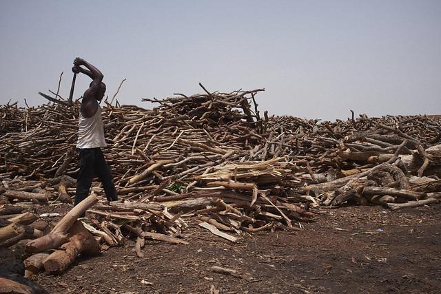 africa trees nature forest timber farming environment agriculture grazing bfa ouagadougou burkina burkinafaso deforestation faso livelihood overgrazing tiogo climateinvestmentfund forestinvestmentprogram
