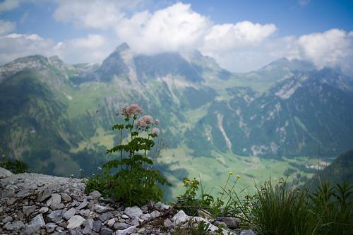 mountains alps flower landscape schweiz switzerland europe dof suisse bokeh hiking 28mm rangefinder alpen svizzera glarus wanderung m9 2014 svizra klöntal elmaritm silberen ©toniv leicam9 140621 muotathalpragelpasssilberenklöntal l1016906