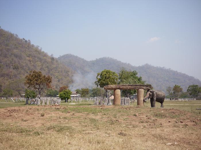 Elephant Nature Park Chiang Mai-23